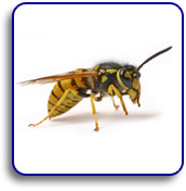 Wasp removal Leeds